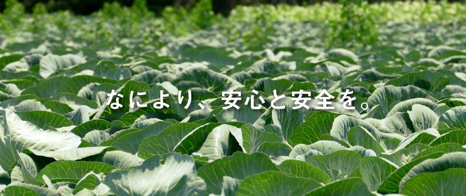 マルイシ青果 熊本 田崎 青果市場 スライドショー1