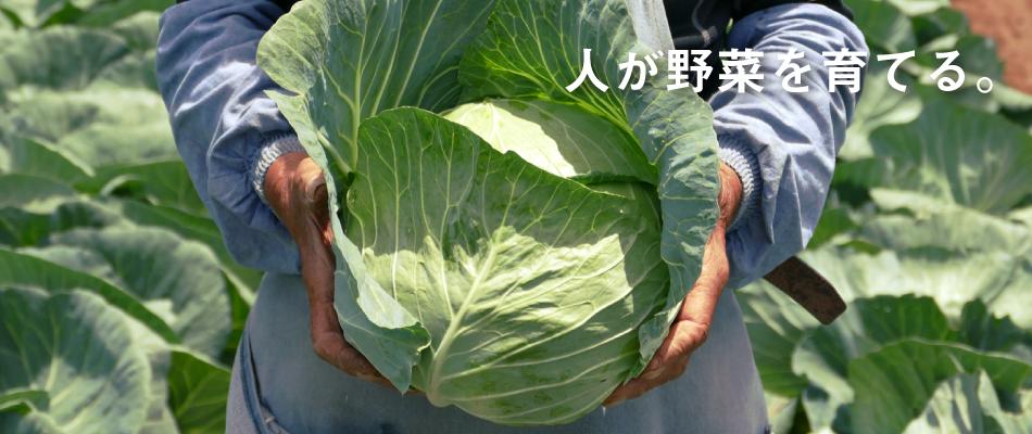 マルイシ青果 熊本 田崎 青果市場 スライドショー2